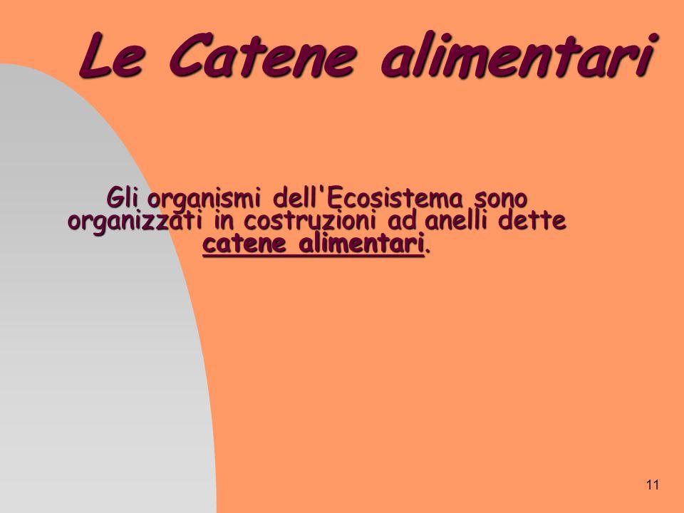 11 Le Catene alimentari Gli organismi dell'Ecosistema sono organizzati in costruzioni ad anelli dette catene alimentari.
