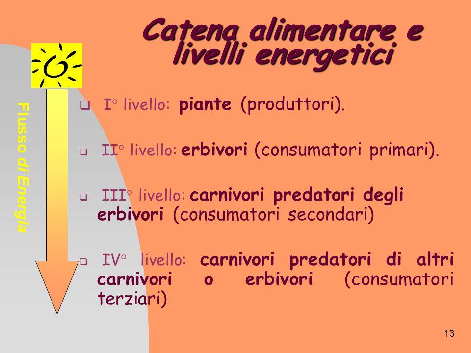 13 Catena alimentare e livelli energetici I° livello: piante (produttori). II° livello: erbivori (consumatori primari). III° livello: carnivori predat