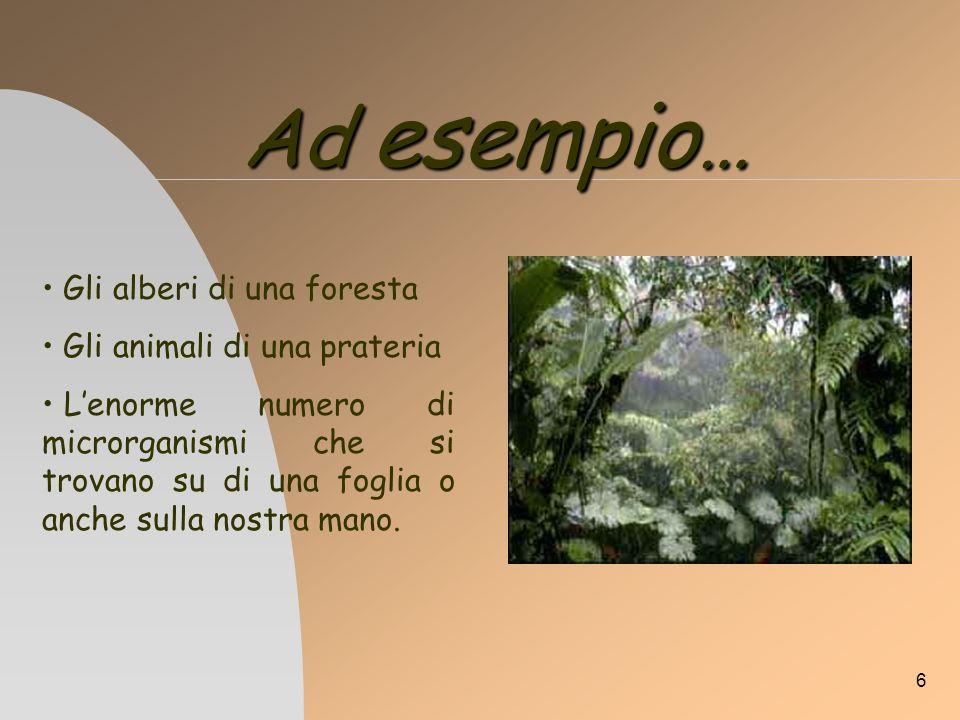 6 Ad esempio … Gli alberi di una foresta Gli animali di una prateria Lenorme numero di microrganismi che si trovano su di una foglia o anche sulla nos