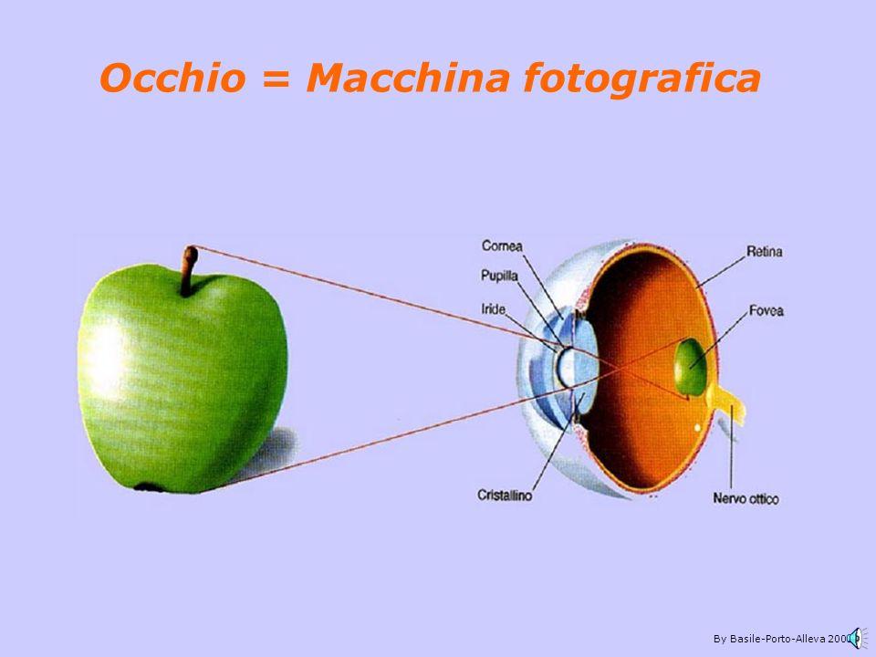 By Basile-Porto-Alleva 2002 La retina