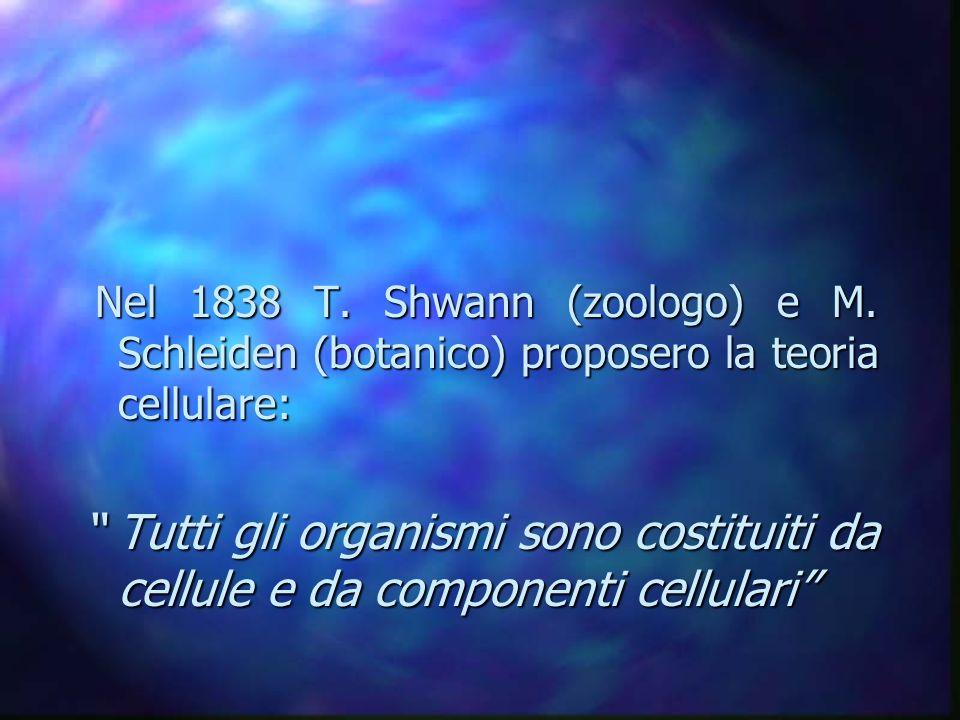 Nel 1838 T. Shwann (zoologo) e M. Schleiden (botanico) proposero la teoria cellulare: Nel 1838 T. Shwann (zoologo) e M. Schleiden (botanico) proposero
