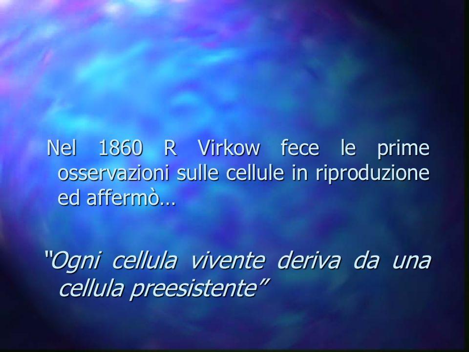 Nel 1860 R Virkow fece le prime osservazioni sulle cellule in riproduzione ed affermò… Nel 1860 R Virkow fece le prime osservazioni sulle cellule in r