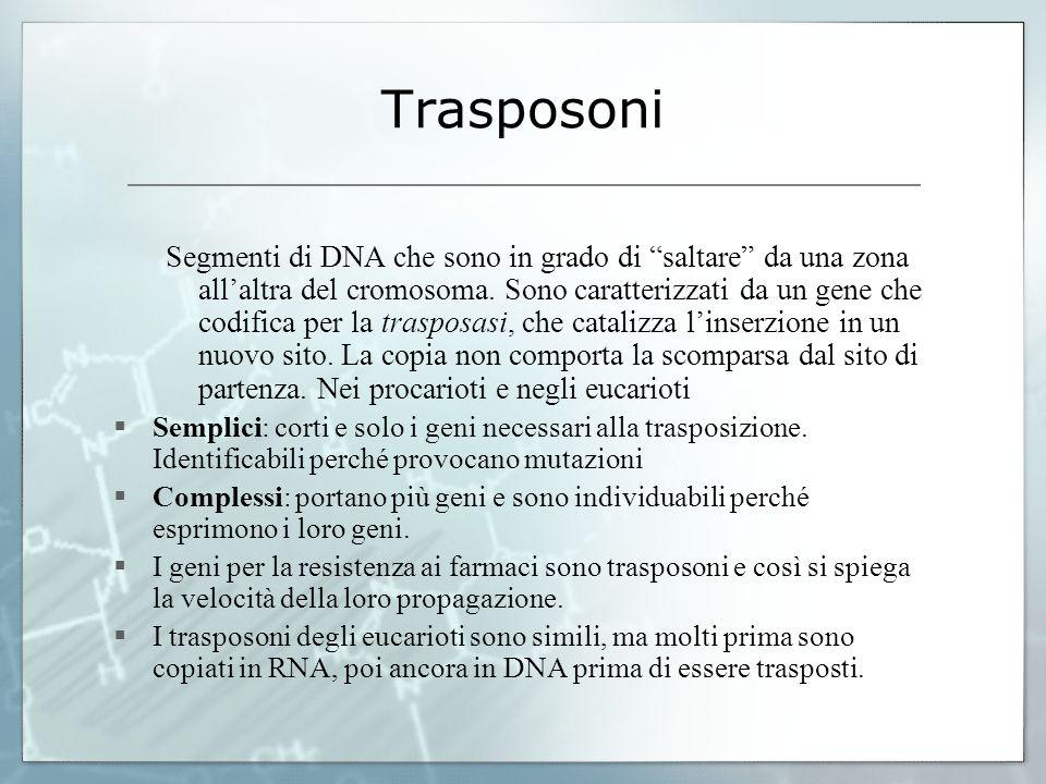 Trasposoni Segmenti di DNA che sono in grado di saltare da una zona allaltra del cromosoma. Sono caratterizzati da un gene che codifica per la traspos