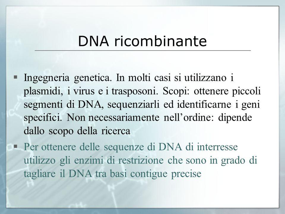 DNA ricombinante Ingegneria genetica. In molti casi si utilizzano i plasmidi, i virus e i trasposoni. Scopi: ottenere piccoli segmenti di DNA, sequenz