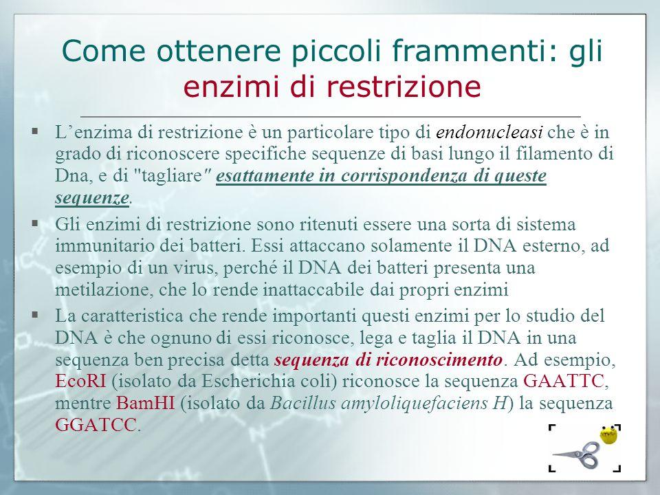 Come ottenere piccoli frammenti: gli enzimi di restrizione Lenzima di restrizione è un particolare tipo di endonucleasi che è in grado di riconoscere