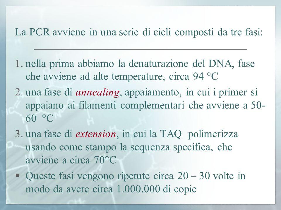 La PCR avviene in una serie di cicli composti da tre fasi: 1.nella prima abbiamo la denaturazione del DNA, fase che avviene ad alte temperature, circa