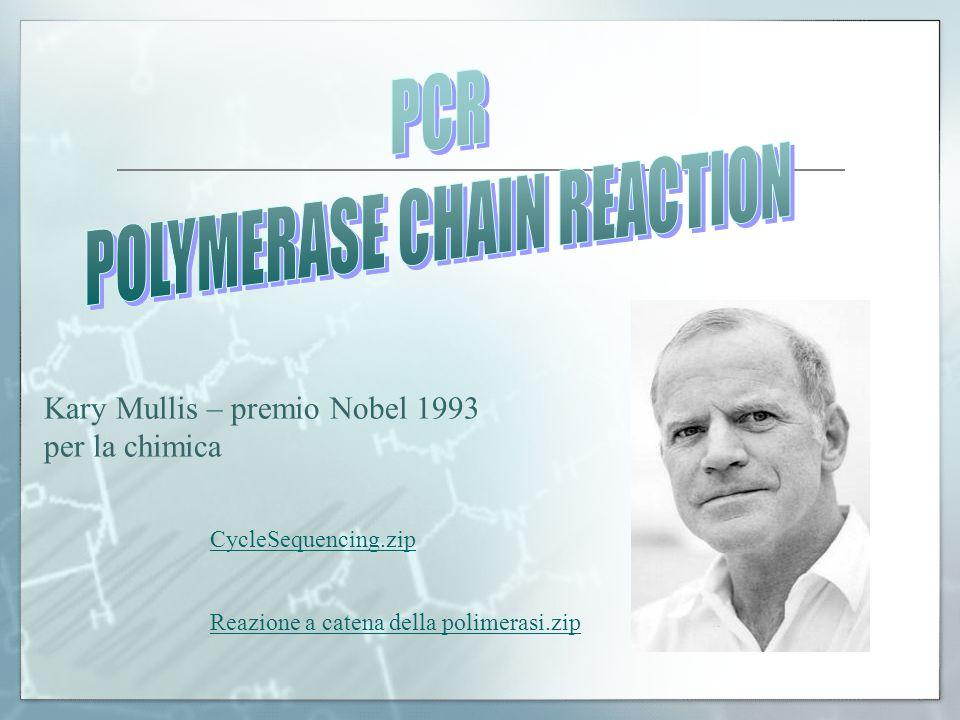 Kary Mullis – premio Nobel 1993 per la chimica CycleSequencing.zip Reazione a catena della polimerasi.zip