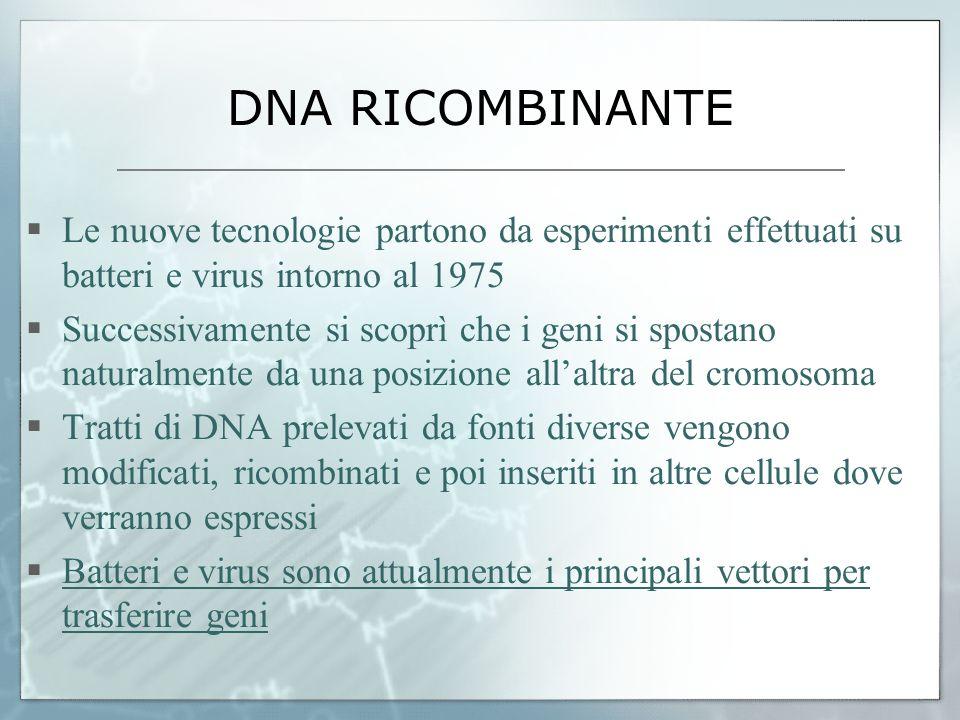 DNA RICOMBINANTE Le nuove tecnologie partono da esperimenti effettuati su batteri e virus intorno al 1975 Successivamente si scoprì che i geni si spos