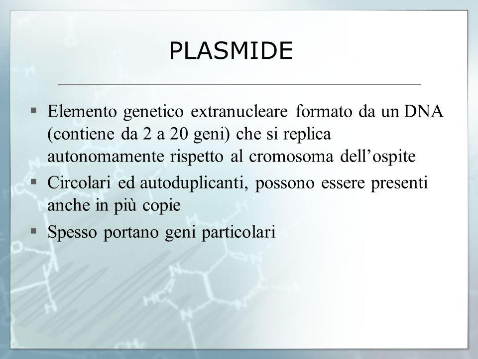 PLASMIDE Elemento genetico extranucleare formato da un DNA (contiene da 2 a 20 geni) che si replica autonomamente rispetto al cromosoma dellospite Cir