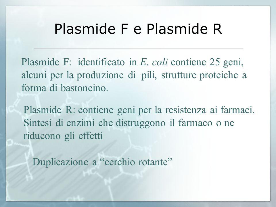 Plasmide F e Plasmide R Plasmide F: identificato in E. coli contiene 25 geni, alcuni per la produzione di pili, strutture proteiche a forma di bastonc