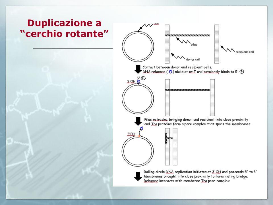 Duplicazione a cerchio rotante