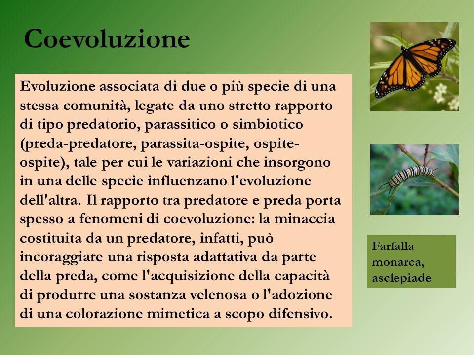 Coevoluzione Evoluzione associata di due o più specie di una stessa comunità, legate da uno stretto rapporto di tipo predatorio, parassitico o simbiot