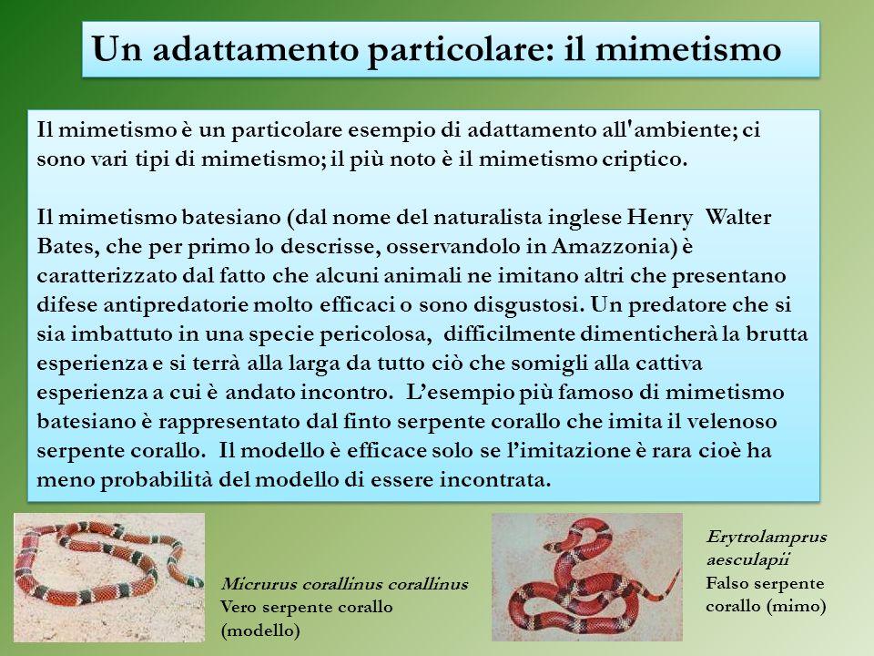 Il mimetismo è un particolare esempio di adattamento all'ambiente; ci sono vari tipi di mimetismo; il più noto è il mimetismo criptico. Il mimetismo b