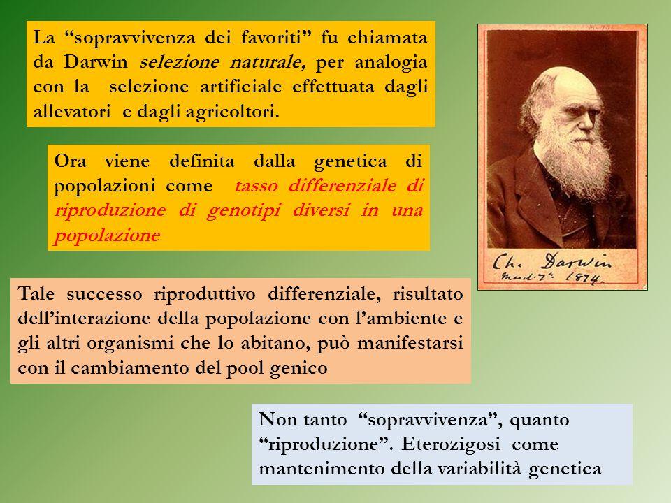 La sopravvivenza dei favoriti fu chiamata da Darwin selezione naturale, per analogia con la selezione artificiale effettuata dagli allevatori e dagli