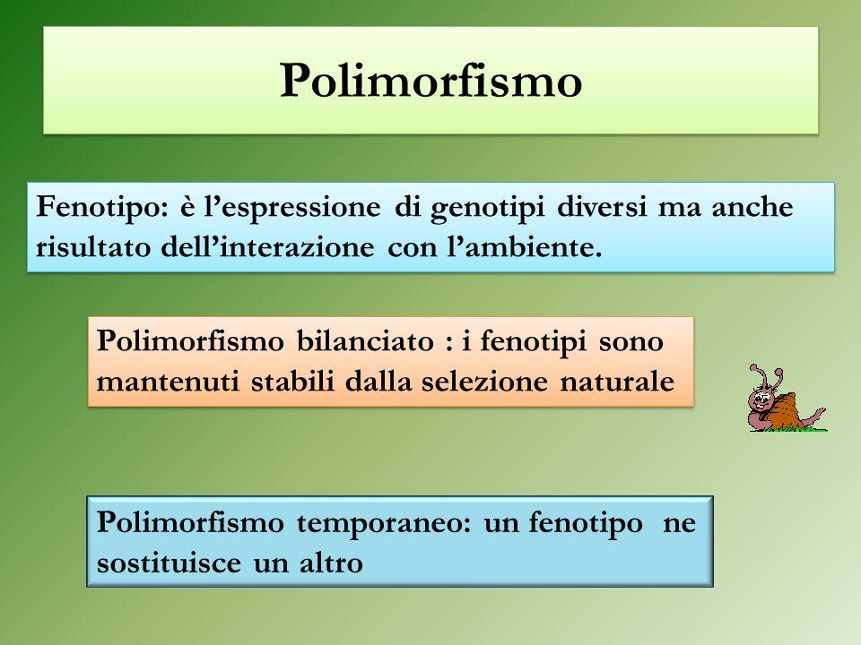 Polimorfismo Polimorfismo bilanciato : i fenotipi sono mantenuti stabili dalla selezione naturale Polimorfismo temporaneo: un fenotipo ne sostituisce