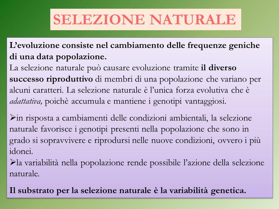 Levoluzione consiste nel cambiamento delle frequenze geniche di una data popolazione. La selezione naturale può causare evoluzione tramite il diverso