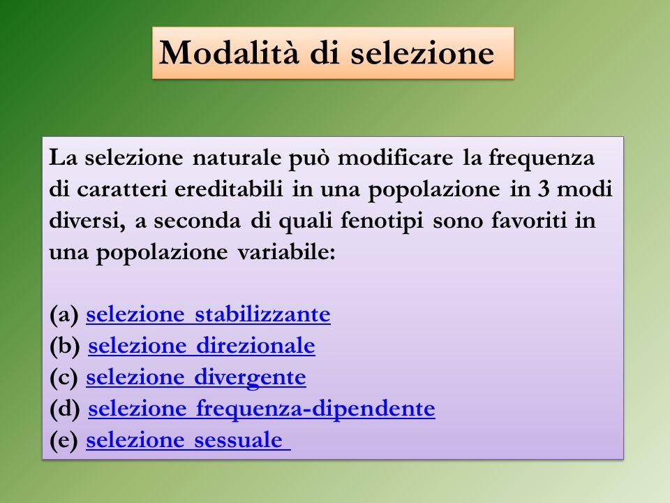 La selezione naturale può modificare la frequenza di caratteri ereditabili in una popolazione in 3 modi diversi, a seconda di quali fenotipi sono favo