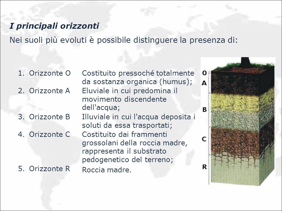 I principali orizzonti Nei suoli più evoluti è possibile distinguere la presenza di: 1.Orizzonte O Costituito pressoché totalmente da sostanza organic