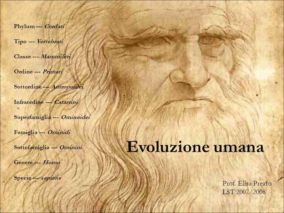 Evoluzione umana Phylum --- Cordati Tipo --- Vertebrati Classe --- Mammiferi Ordine --- Primati Sottordine --- Antropoidei Infraordine --- Catarrini S