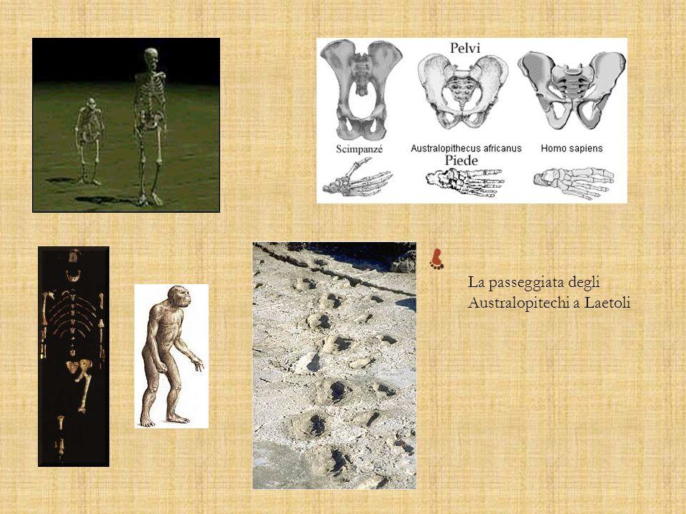 La passeggiata degli Australopitechi a Laetoli