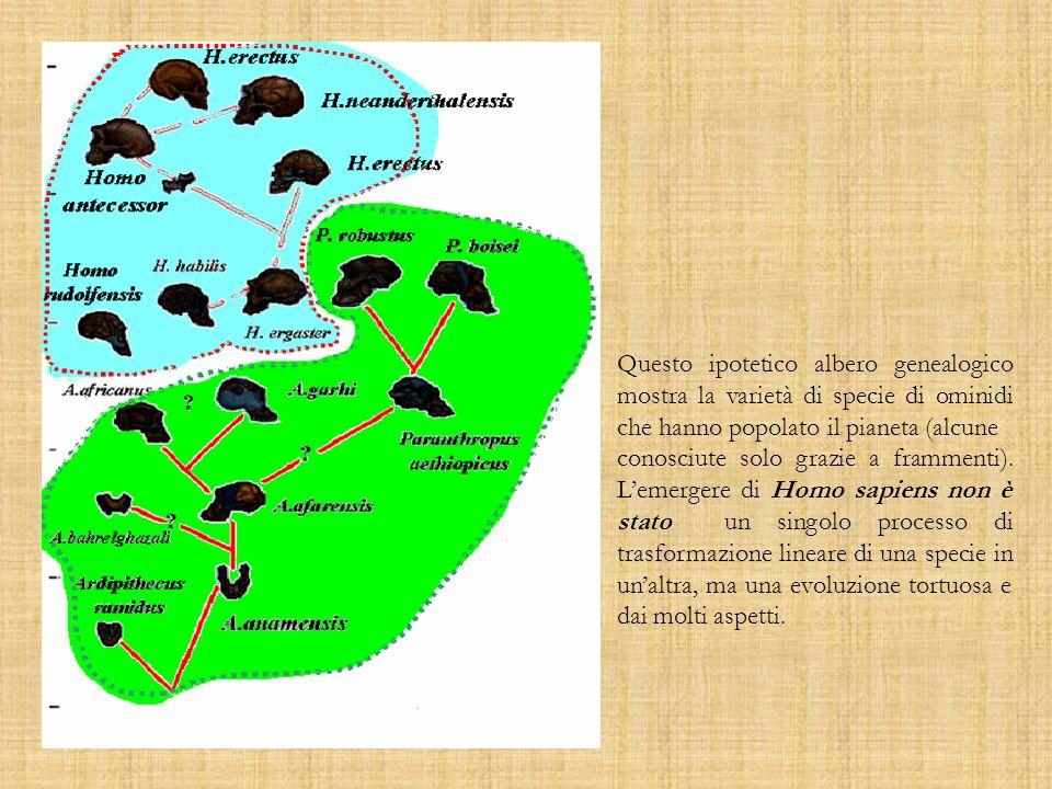 Questo ipotetico albero genealogico mostra la varietà di specie di ominidi che hanno popolato il pianeta (alcune conosciute solo grazie a frammenti).