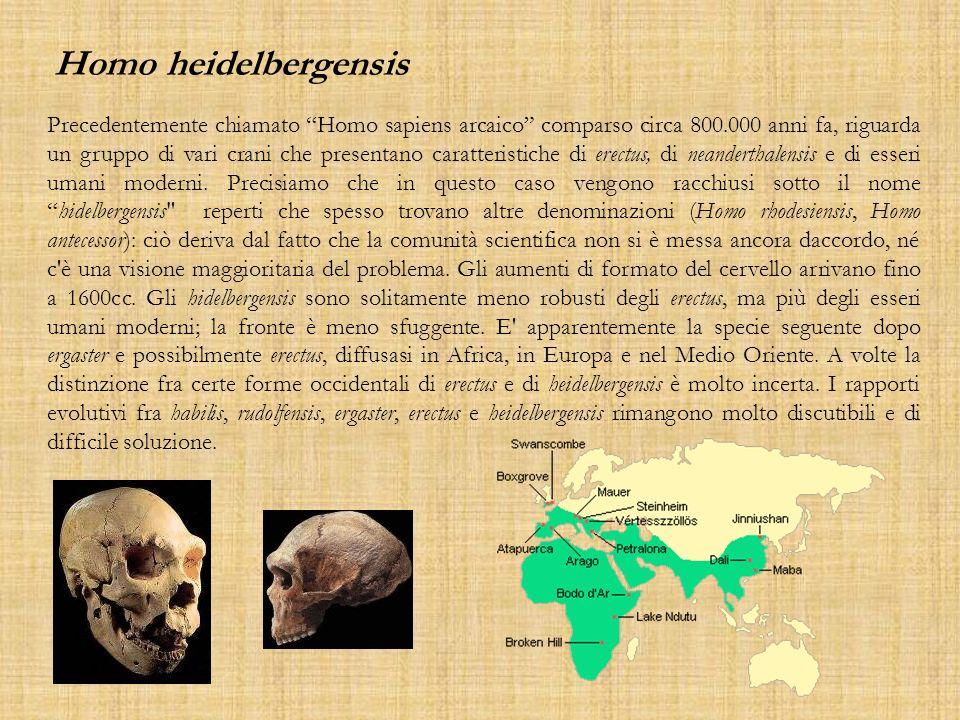 Precedentemente chiamato Homo sapiens arcaico comparso circa 800.000 anni fa, riguarda un gruppo di vari crani che presentano caratteristiche di erect