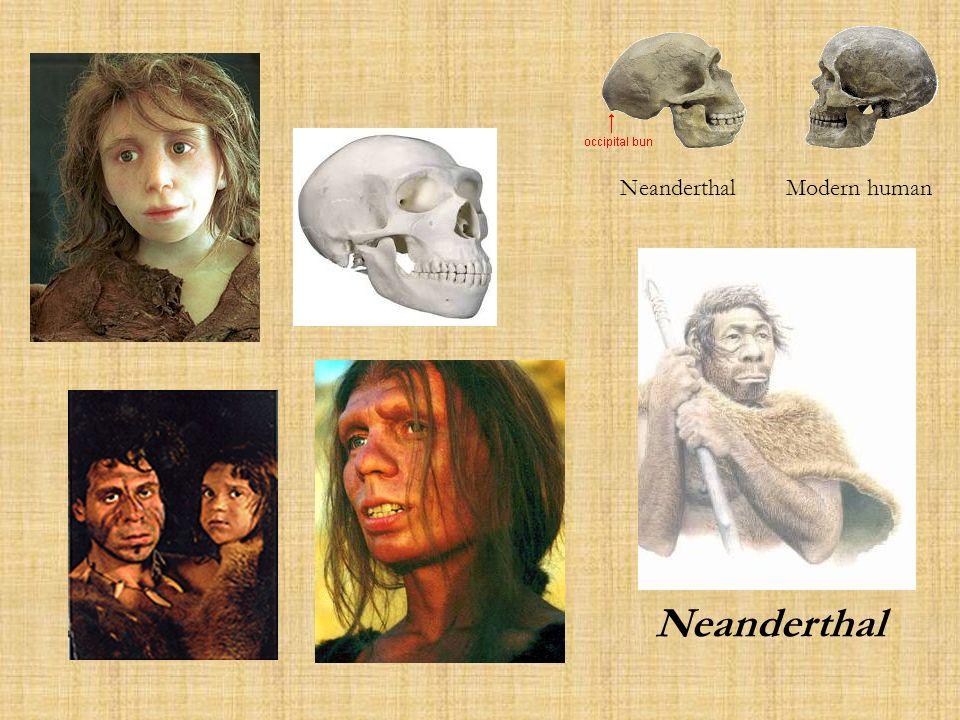 Neanderthal Modern human