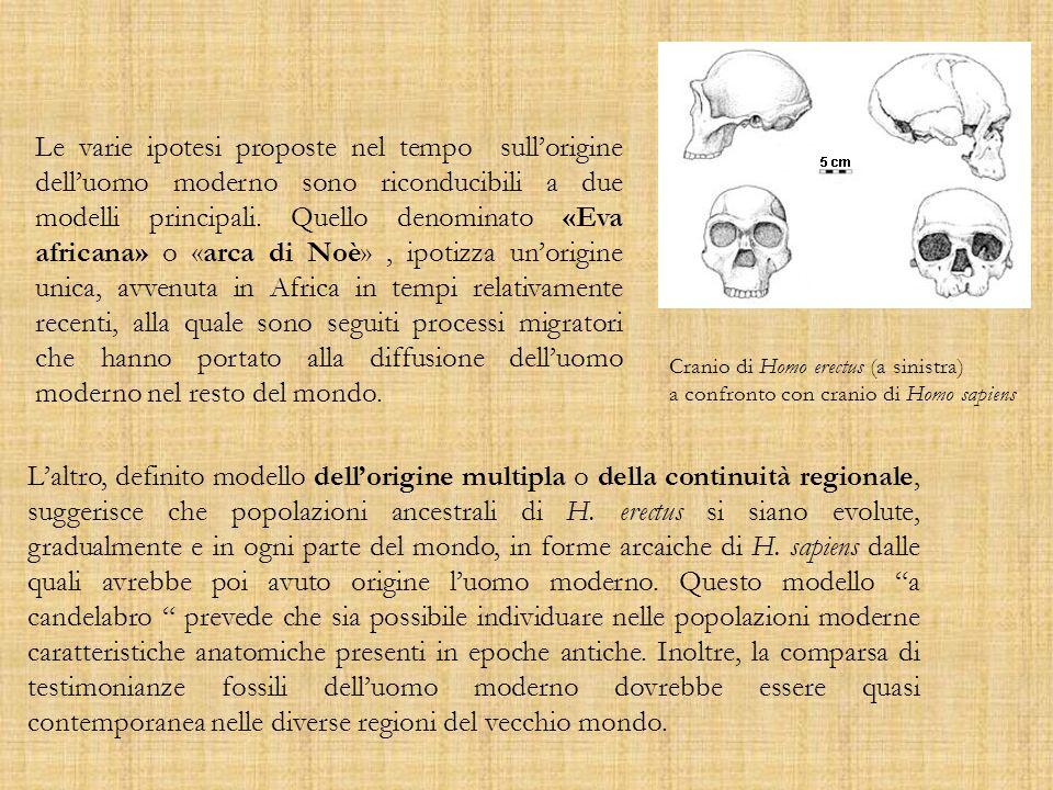 Le varie ipotesi proposte nel tempo sullorigine delluomo moderno sono riconducibili a due modelli principali. Quello denominato «Eva africana» o «arca