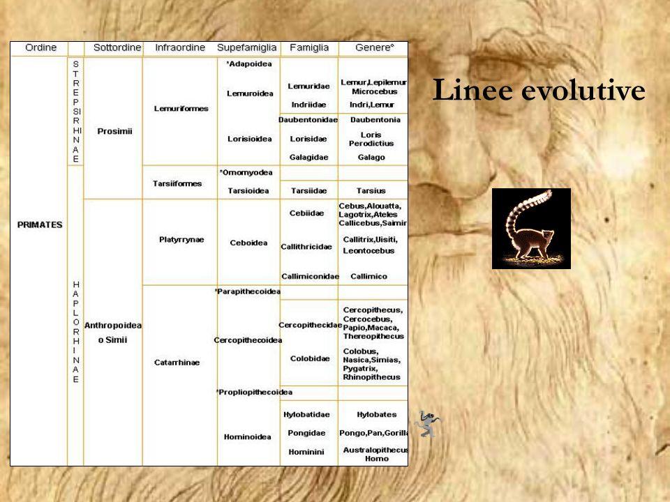 Linee evolutive