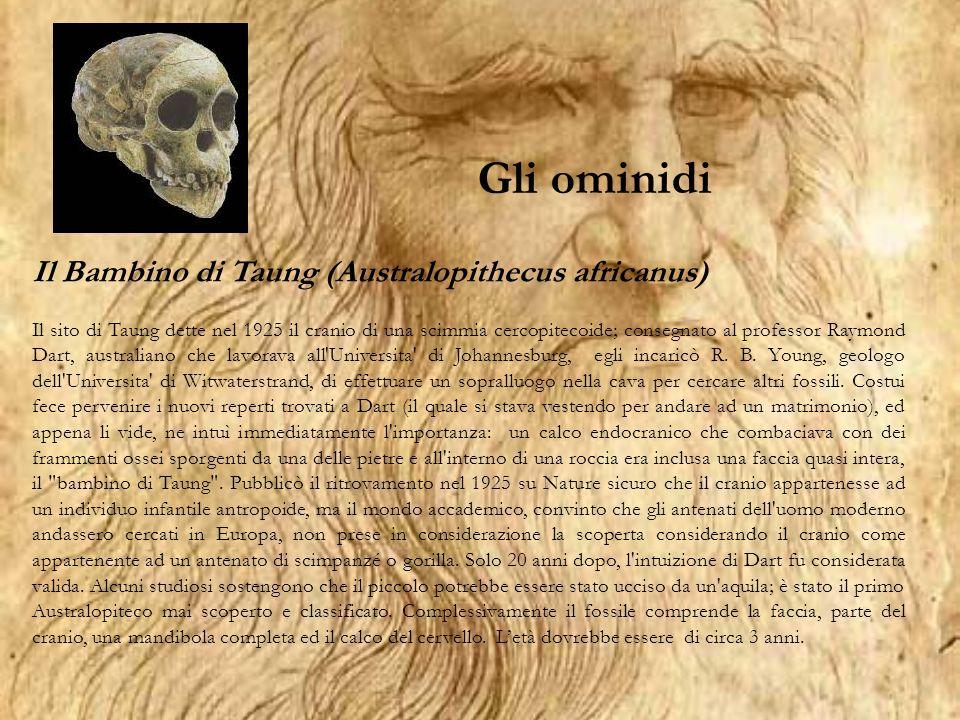 Genere Australopithecus Ominidi africani datati dai 4 ai 2 milioni di anni fa.