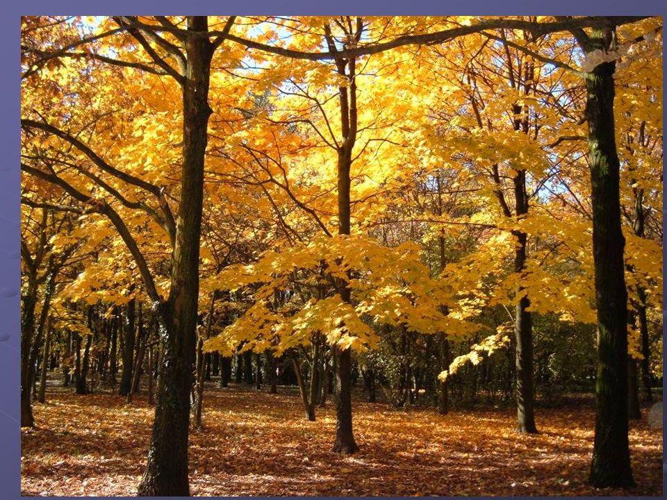 Esempio Vado in un parco in autunno e vedo le foglie ammucchiate di preferenza da una parte Perché si trovano in questa posizione.