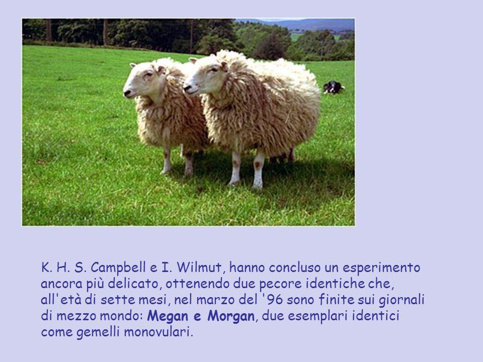 K. H. S. Campbell e I. Wilmut, hanno concluso un esperimento ancora più delicato, ottenendo due pecore identiche che, all'età di sette mesi, nel marzo