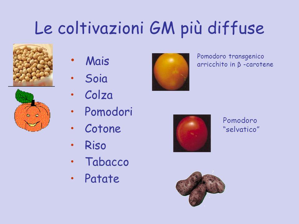 Le coltivazioni GM più diffuse Mais Soia Colza Pomodori Cotone Riso Tabacco Patate Pomodoro selvatico Pomodoro transgenico arricchito in β -carotene