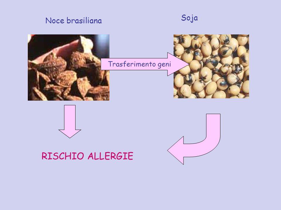 Trasferimento geni Noce brasiliana Soja RISCHIO ALLERGIE