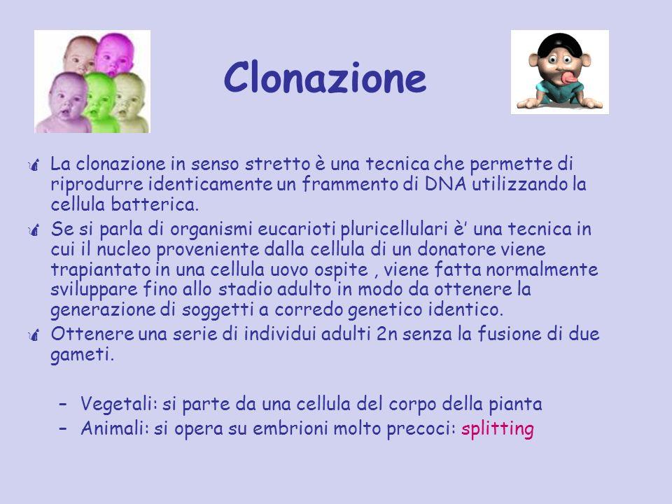 Clonazione La clonazione in senso stretto è una tecnica che permette di riprodurre identicamente un frammento di DNA utilizzando la cellula batterica.