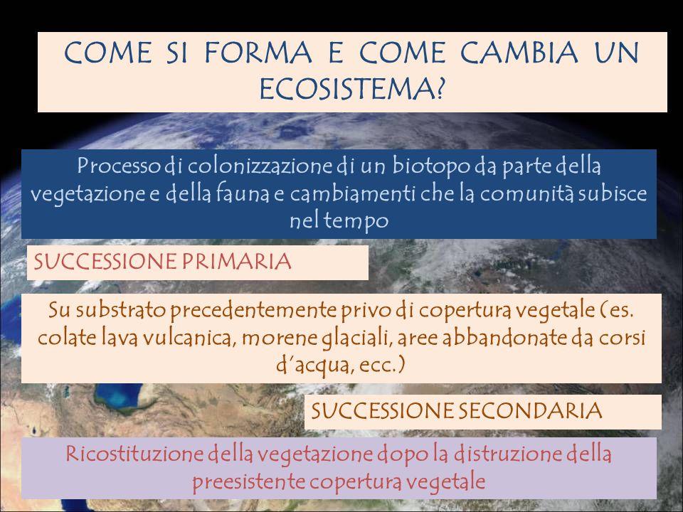 SUCCESSIONE COME SI FORMA E COME CAMBIA UN ECOSISTEMA? SUCCESSIONE PRIMARIA Su substrato precedentemente privo di copertura vegetale (es. colate lava
