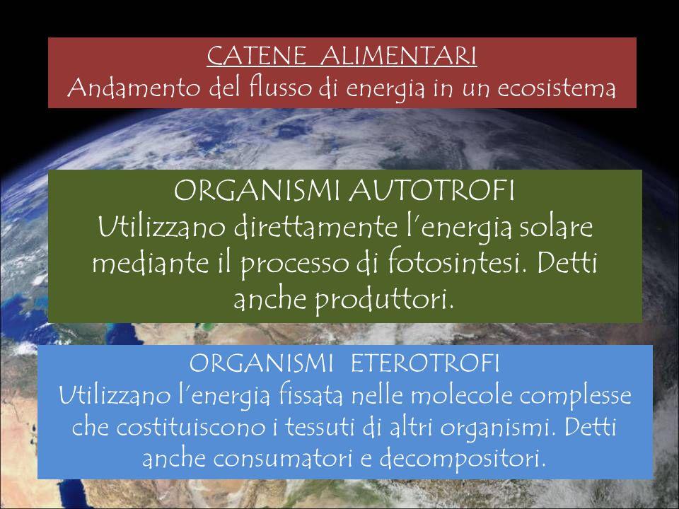 CATENE ALIMENTARI Andamento del flusso di energia in un ecosistema ORGANISMI AUTOTROFI Utilizzano direttamente lenergia solare mediante il processo di