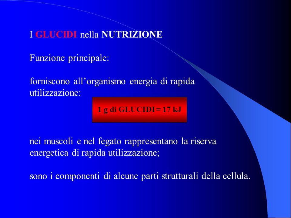 I GLUCIDI nella NUTRIZIONE Funzione principale: forniscono allorganismo energia di rapida utilizzazione: 1 g di GLUCIDI = 17 kJ nei muscoli e nel fega