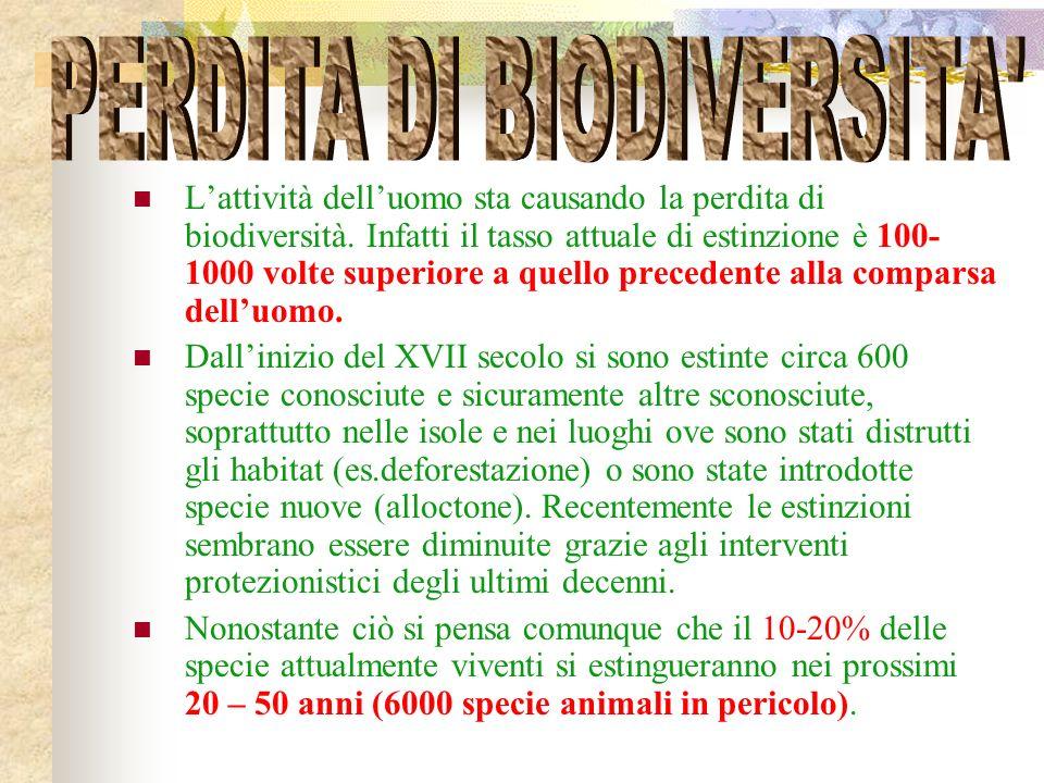 Lattività delluomo sta causando la perdita di biodiversità.