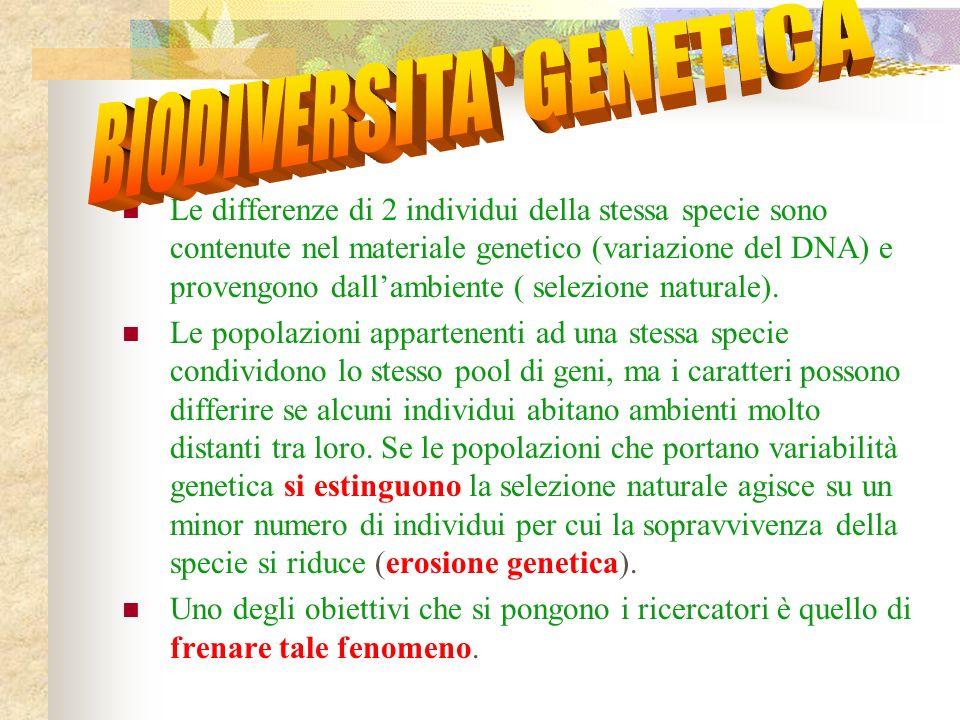 Le differenze di 2 individui della stessa specie sono contenute nel materiale genetico (variazione del DNA) e provengono dallambiente ( selezione naturale).