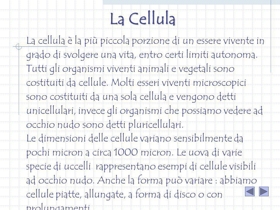 La cellula è la più piccola porzione di un essere vivente in grado di svolgere una vita, entro certi limiti autonoma. Tutti gli organismi viventi anim