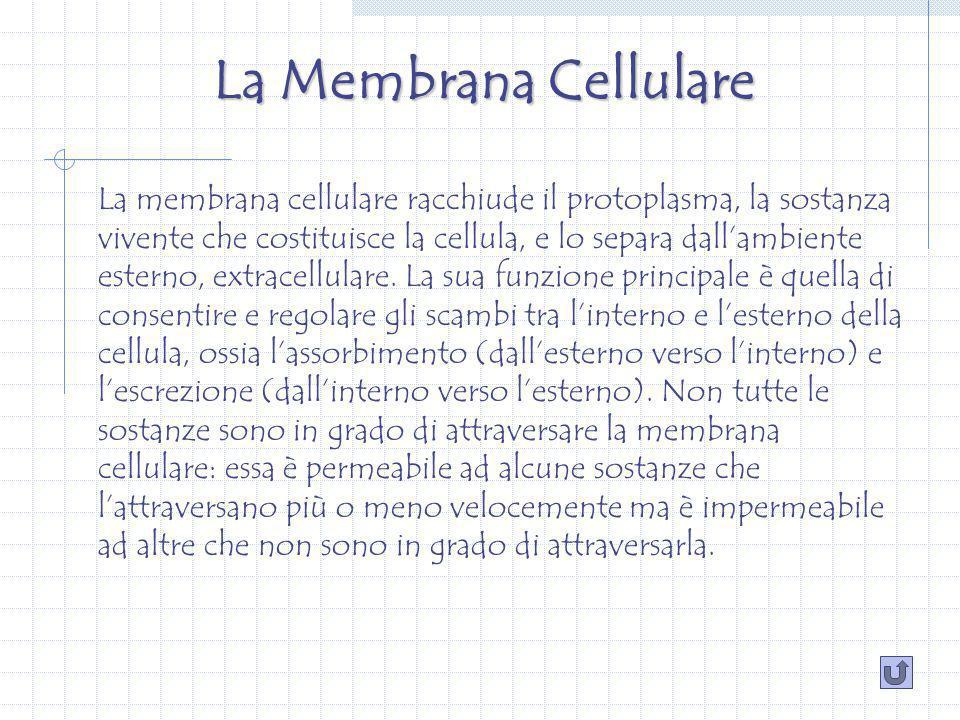 La Membrana Cellulare La membrana cellulare racchiude il protoplasma, la sostanza vivente che costituisce la cellula, e lo separa dallambiente esterno