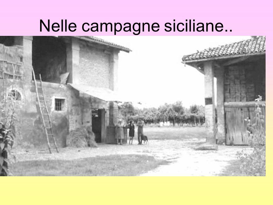 Nelle campagne siciliane..