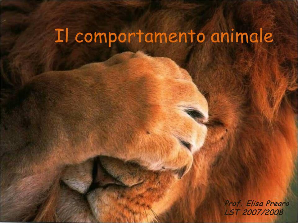 Il comportamento animale Prof. Elisa Prearo LST 2007/2008