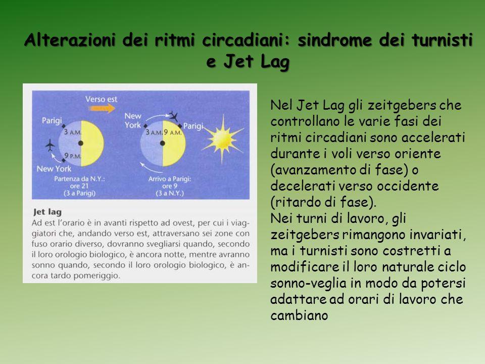 Alterazioni dei ritmi circadiani: sindrome dei turnisti e Jet Lag Nel Jet Lag gli zeitgebers che controllano le varie fasi dei ritmi circadiani sono a
