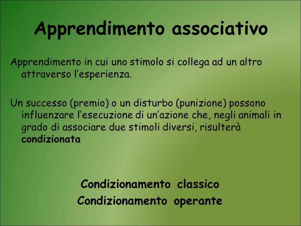 Apprendimento associativo Apprendimento in cui uno stimolo si collega ad un altro attraverso lesperienza. Un successo (premio) o un disturbo (punizion