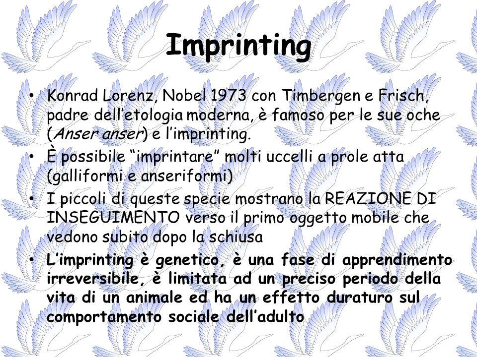 Imprinting Konrad Lorenz, Nobel 1973 con Timbergen e Frisch, padre delletologia moderna, è famoso per le sue oche (Anser anser) e limprinting. È possi