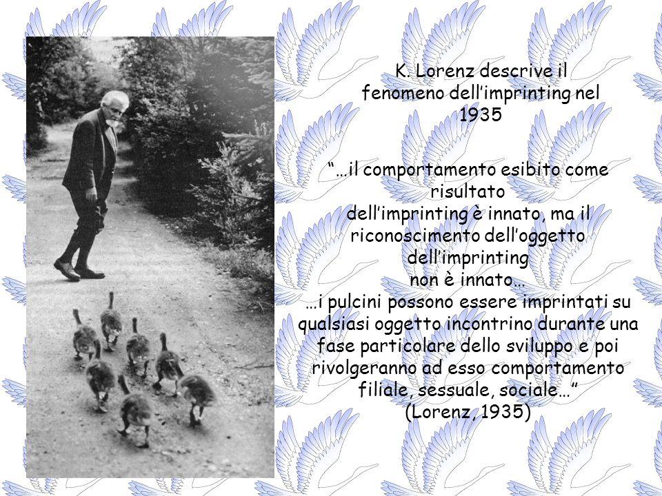 K. Lorenz descrive il fenomeno dellimprinting nel 1935 …il comportamento esibito come risultato dellimprinting è innato, ma il riconoscimento dellogge