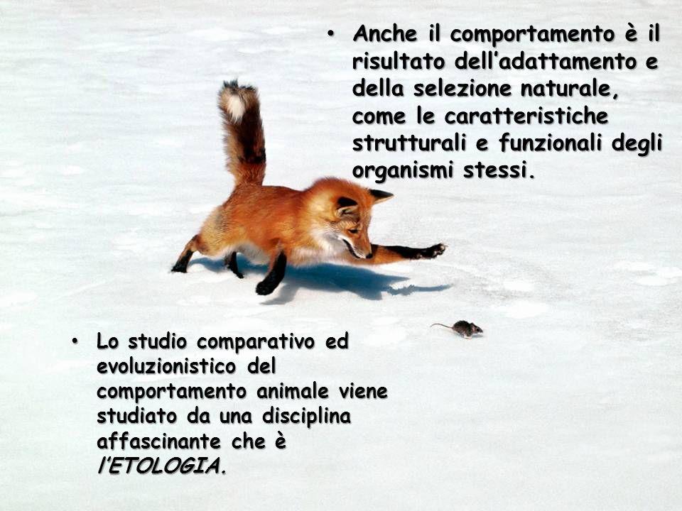 Anche il comportamento è il risultato delladattamento e della selezione naturale, come le caratteristiche strutturali e funzionali degli organismi ste