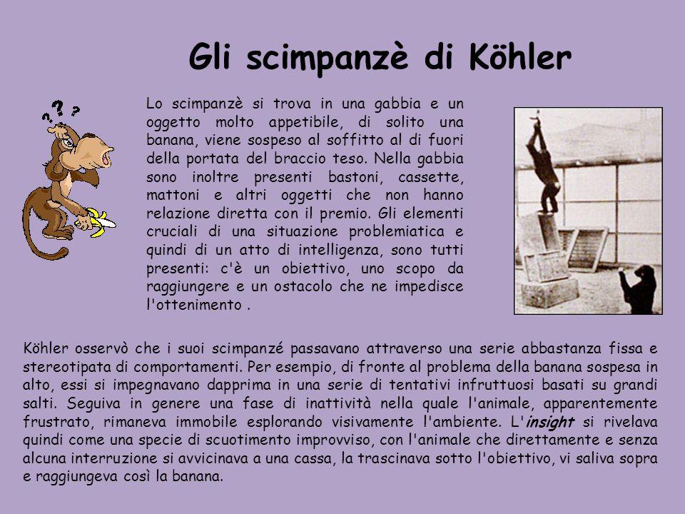 Gli scimpanzè di Köhler Lo scimpanzè si trova in una gabbia e un oggetto molto appetibile, di solito una banana, viene sospeso al soffitto al di fuori